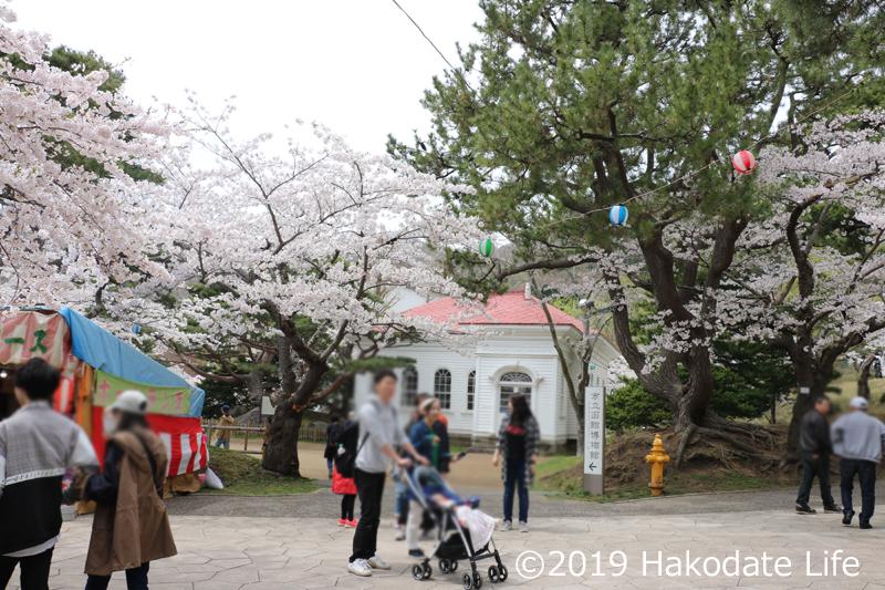 春の旧函館博物館前