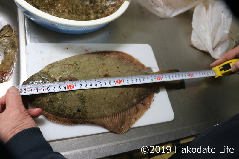 37-38cmマコガレイ
