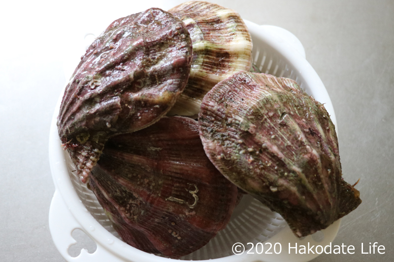 エゾキンチャクガイ(通称ばばのて)
