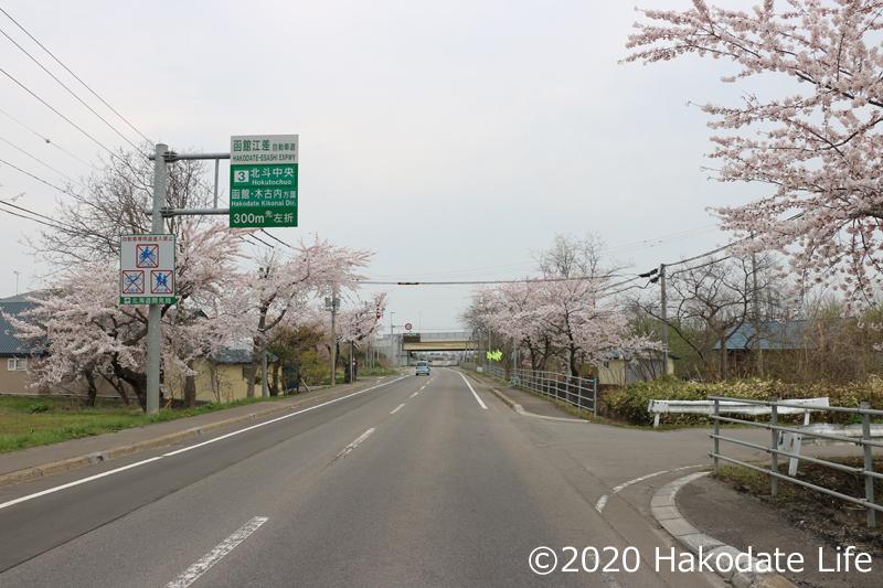 清川千本桜①
