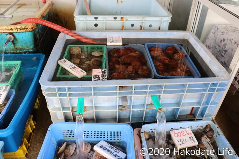 生け簀には一杯の魚介類