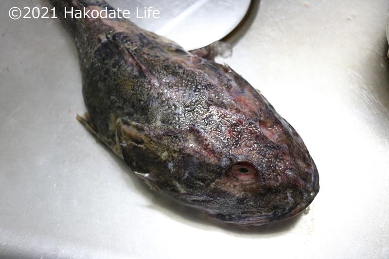 トゲカジカ(鍋壊し)